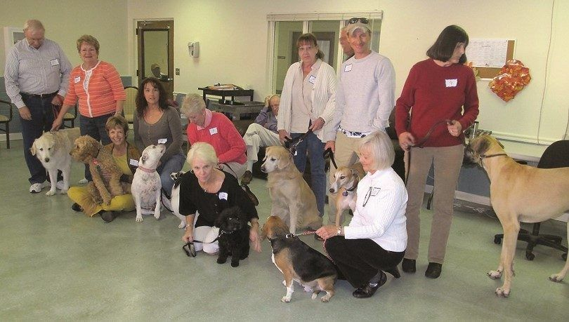 grupo de perros de terapia