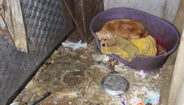 Este asombroso del molino del perrito Rescate te dejarГЎ en lГЎgrimas