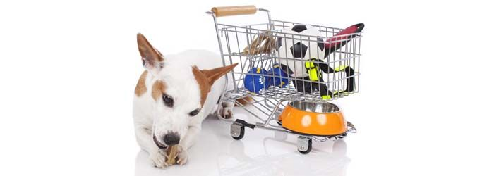 enero`s Best Deals on Dog Products