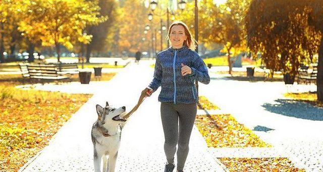 Consejos para establecer un liderazgo con su nuevo perro