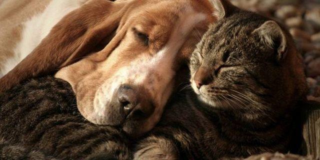 Top 10 mejores perros para que abrazan
