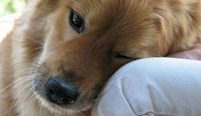 Top 10 mejores perros para la depresión