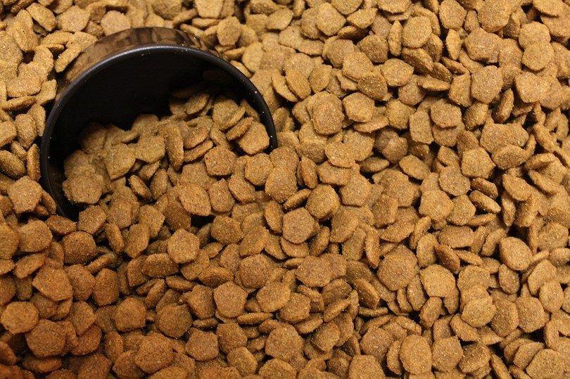 alimentos secos para perros