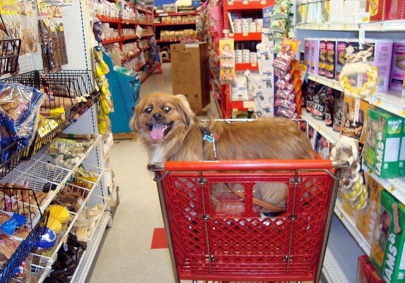 Perro en un carro de compras