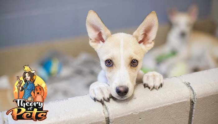 Adopta un perrito para su estilo de vida