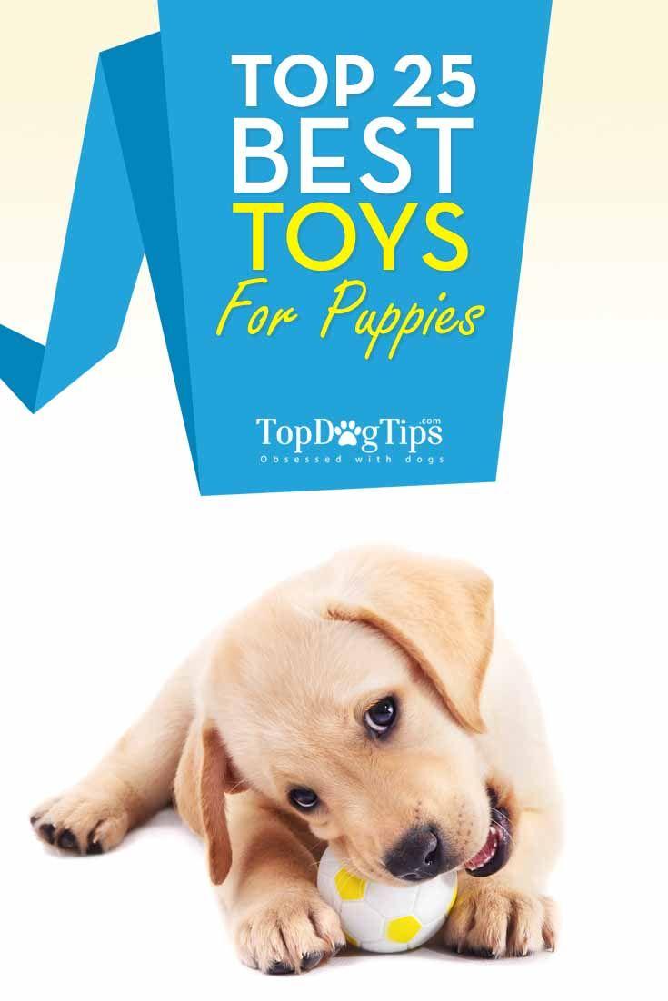Mejor cachorro juguetes para perros que mastican Un lote