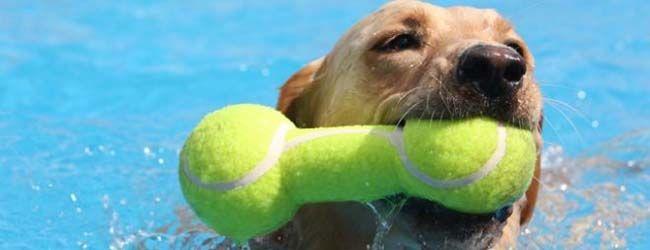 Top 25 mejores juguetes para la denticiГіn del perrito o perros que mastican
