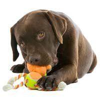 Top 25 mejores juguetes para perros perrito que mastican duro