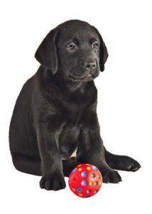 Top Mejor cachorro juguetes para perros que mastican Una revisiГіn Lote