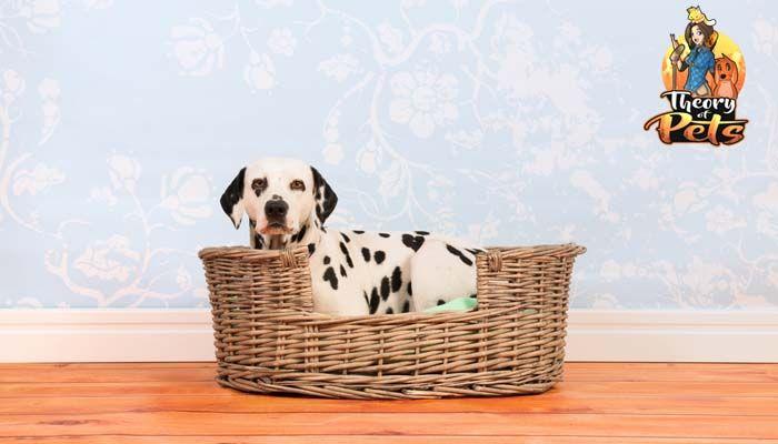 Beneficios para la salud de las camas del perro