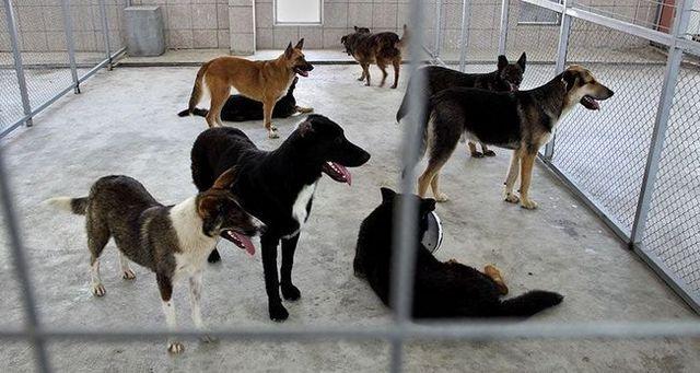 Top 5 mitos sobre los perros del refugio