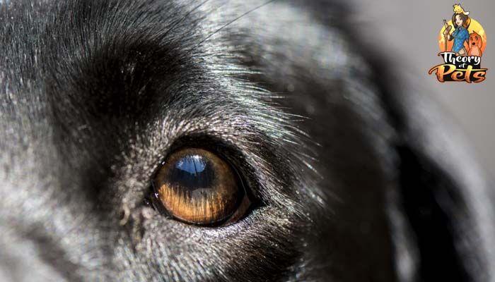 ¿Qué tan eficaces y beneficiosos son las pruebas de ADN para perros