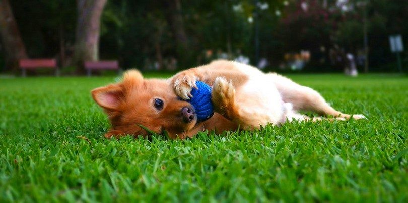 Los mejores productos para perros