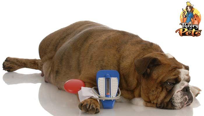 Frente a la Diabetes canina
