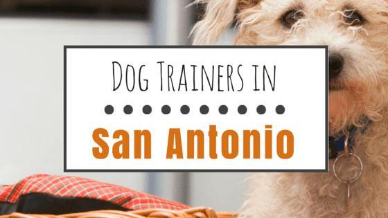 Top 8 opciones para entrenamiento de perros en san antonio