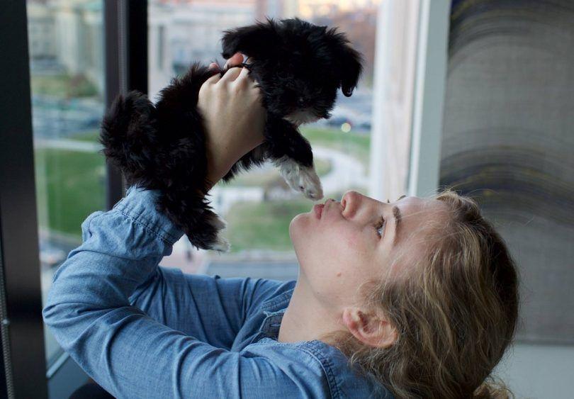 Los mejores perros hipoalergénicos: elegir el mejor compañero cuando usted es alérgico