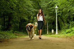 Los mejores consejos sobre cГіmo enseГ±ar a un perro a caminar con una correa segura y efectiva