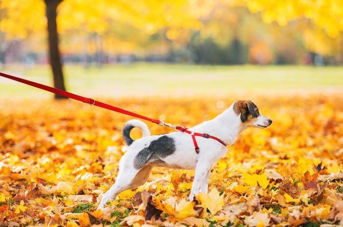 La formaciГіn continua correa del perro al aire libre