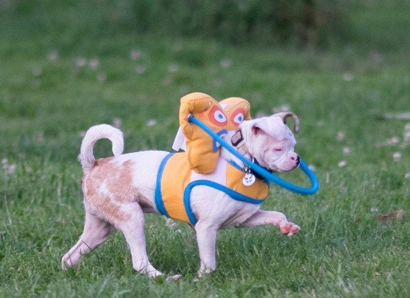 Juguetes para los perros ciegos: deben tener juguetes para su perro con discapacidad visual