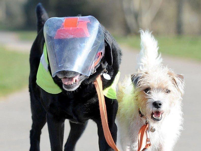 Blind Dog Guías de perro