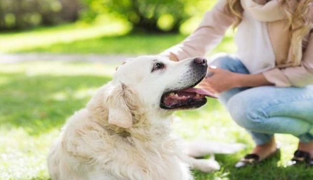 El seguimiento de su comportamiento: una parte esencial del cuidado del perro