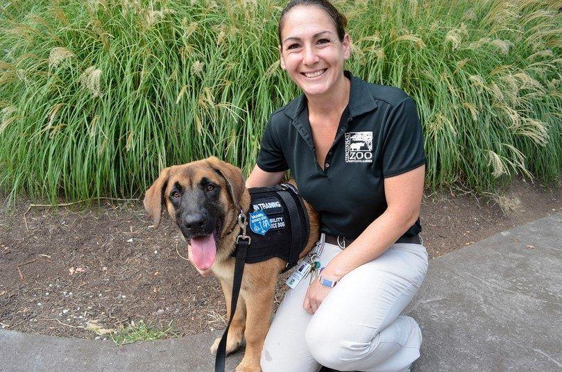 El entrenamiento de un perro de servicio: la preparación y pasos a seguir