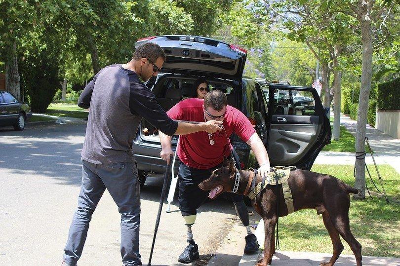 ayudando perro de servicio