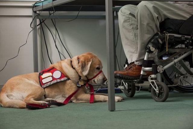 Veinte preguntas para un entrenador de perros de servicio