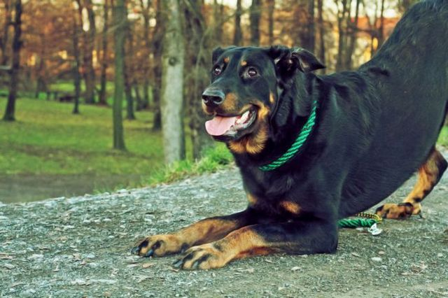 Dos trucos divertidos y fáciles de enseñar a su perro!