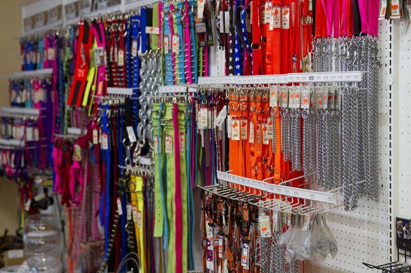Tipos de collares de perro: cosas que debe saber antes de hacer una compra
