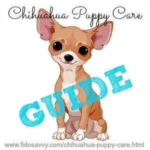 Chihuahua novedosa guía de cuidado del perrito