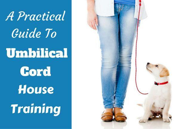entrenamiento de la casa del cordón umbilical - perrito del laboratorio en el correo junto a la muchacha en el fondo blanco