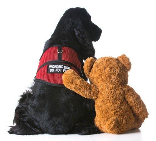 Perro salva servicio increíble chica de 5 millas de distancia