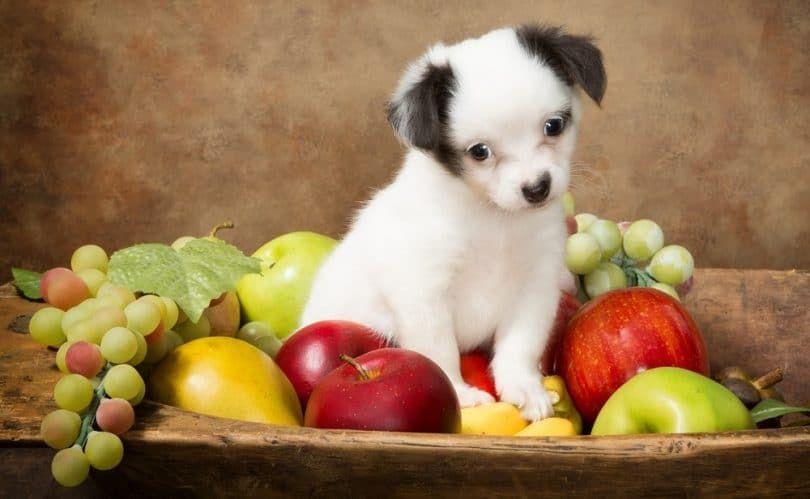 Perro con las uvas tóxico