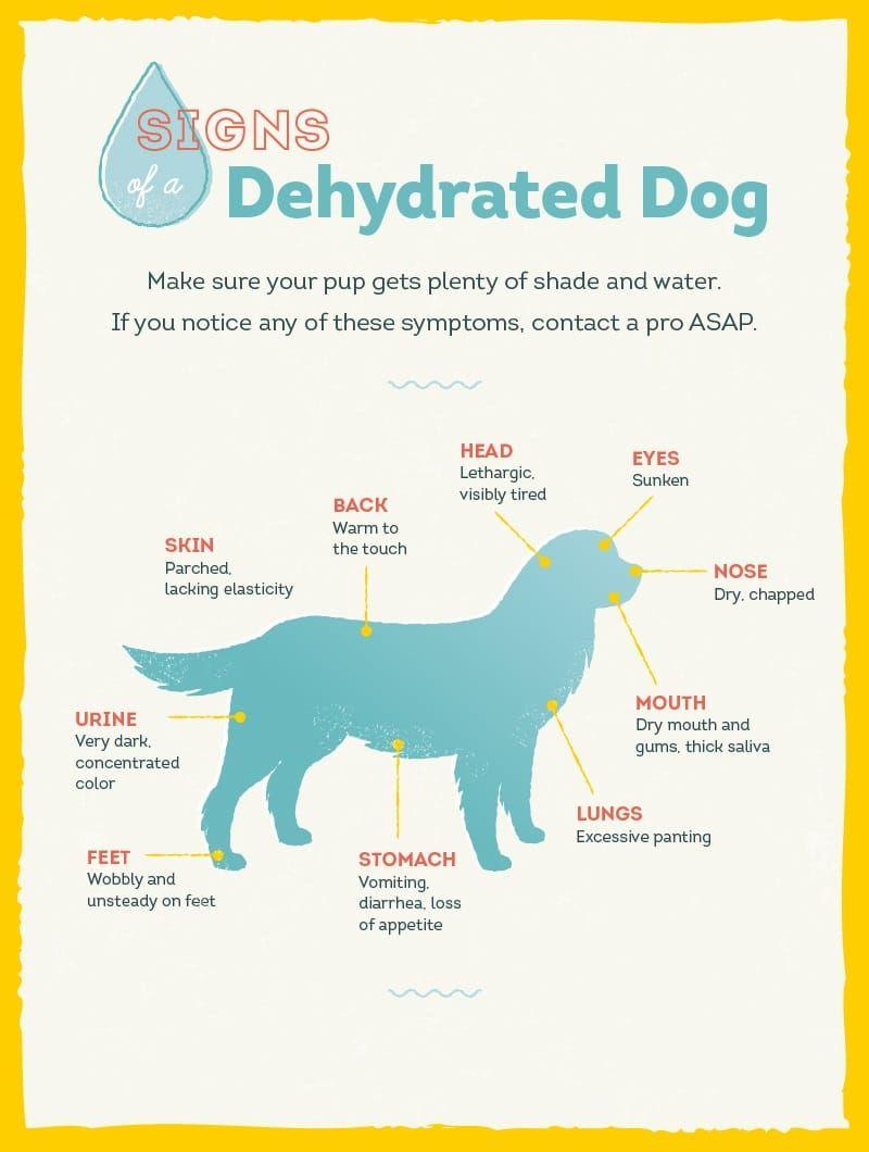 perros deshidratados canta