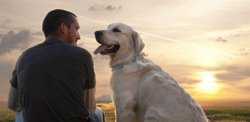 Hombre y perro con problemas