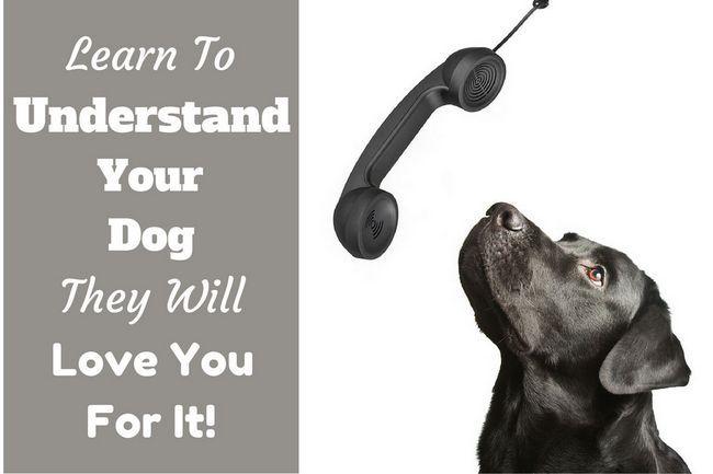 La comprensión de su perro - la cosa más valiosa que usted puede aprender a hacer