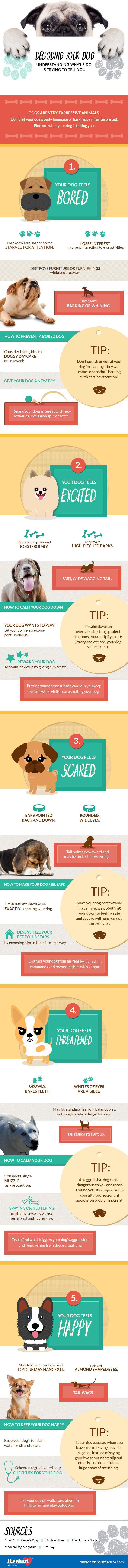 La comprensiГіn de su perro`s Body Language Infographic