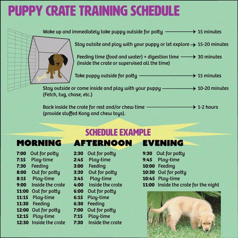 El uso de una caja: la forma de la perrera entrenar a un cachorro