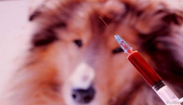 El uso de espectro interceptor para perros para luchar contra los gusanos