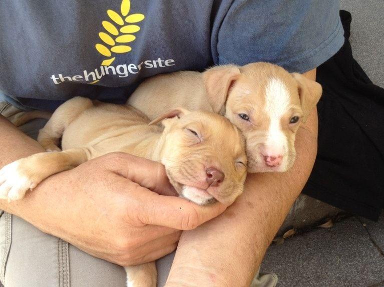 Cinco cachorros semana de espera para los tiros