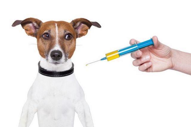 Las vacunas frente a las vacunas: la dirección de este controvertido tema de forma natural