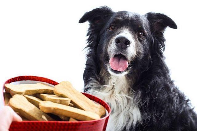 Recetas convite del perro del día de san valentín