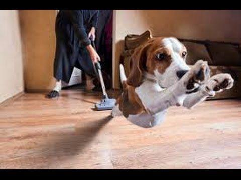 Vídeo: cómo los perros reaccionan a las aspiradoras