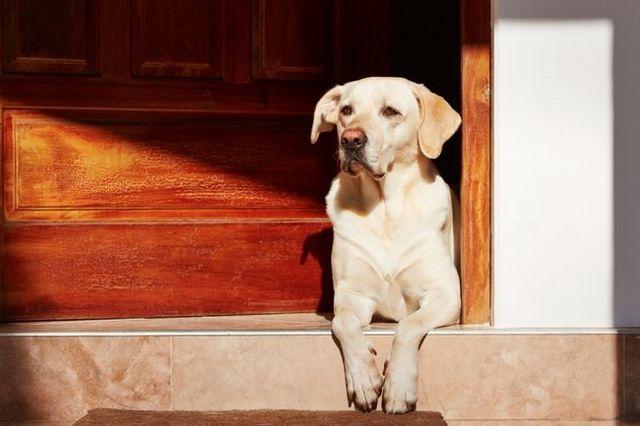 Vídeo: cómo detener la puerta de pernos para la seguridad de su perro