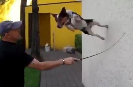Vídeo: jumpy el perro es increíble!