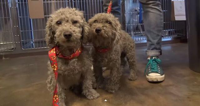 VГdeo: la increГble transformaciГіn de dos perros depГіsito de chatarra sin hogar