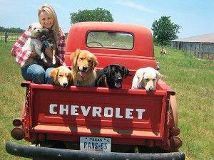 Voto en los premios enviar dogington: mejor celebridad amante de perro