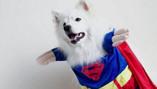 Espere hasta que vea estos perros increíble súper héroe fotos