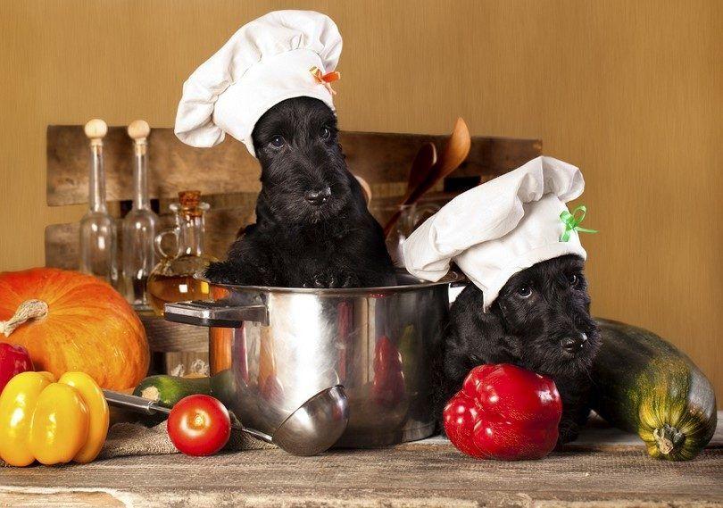 La pérdida de peso de alimentos para perros